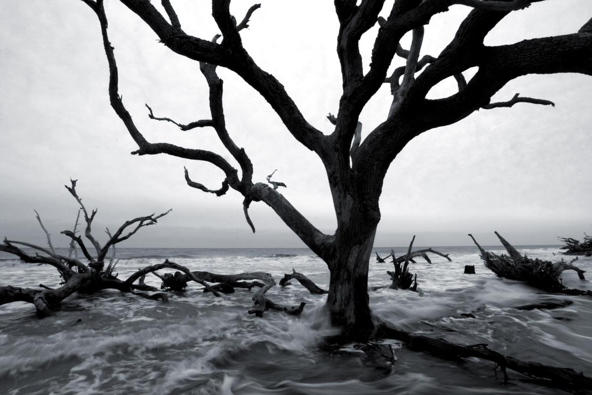 Driftwood_beach01