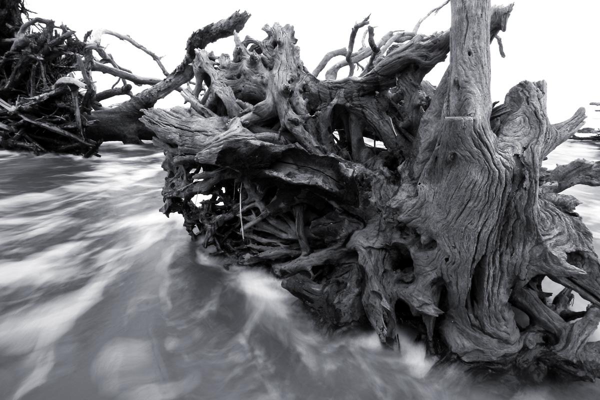 Driftwood_beach02