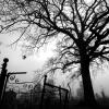 Davis_Cemetery