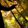 fall_hands