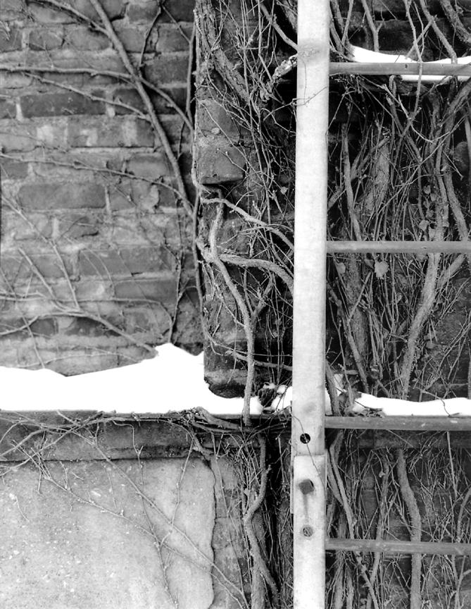 winter_vines
