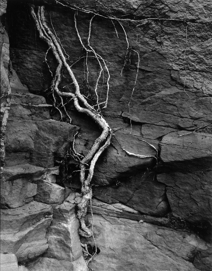 zion_root