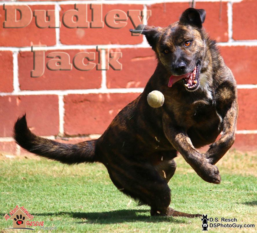 1_Dudley_Jack02