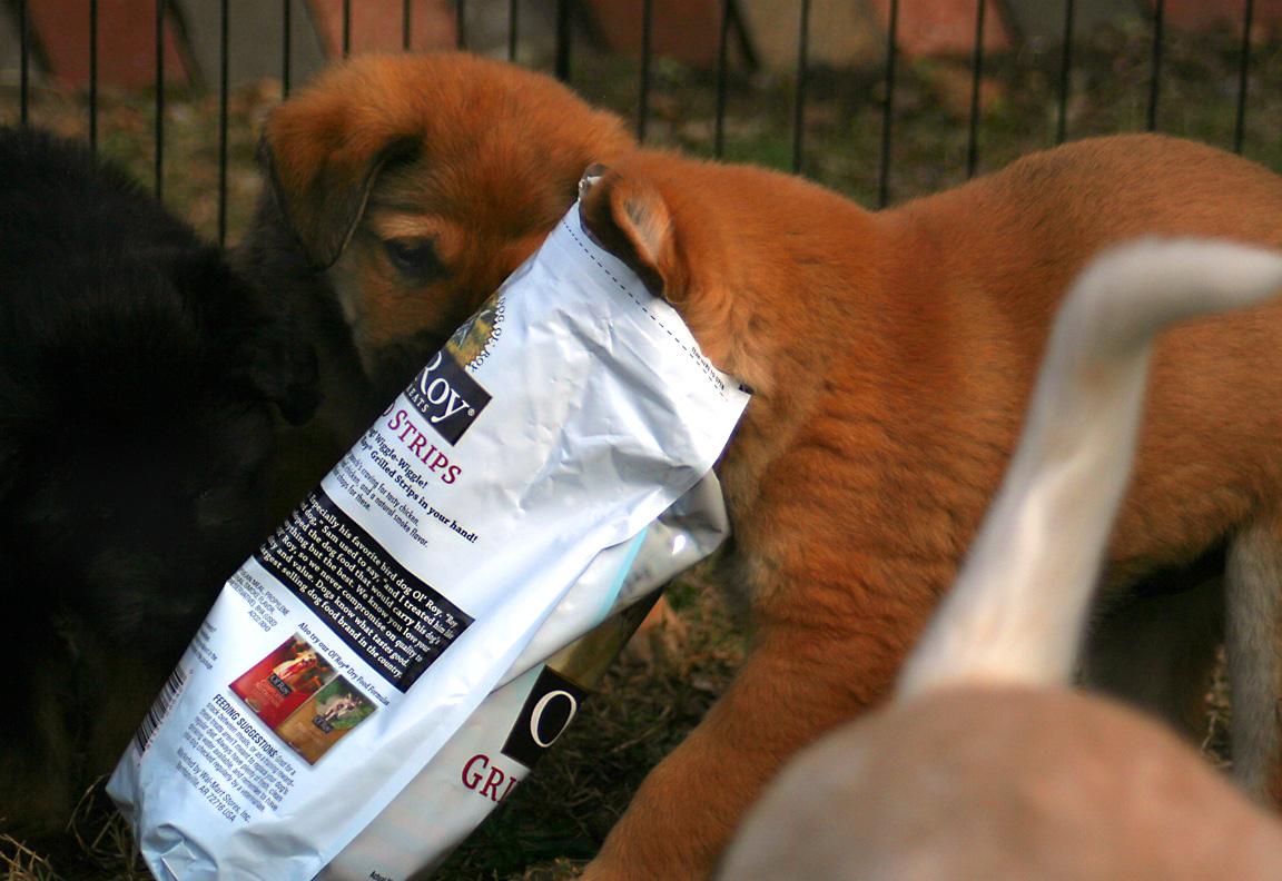 Pups_in_bag