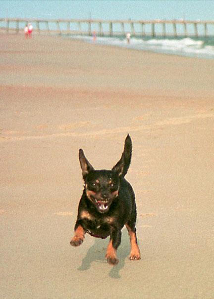 Tia_at_the_beach