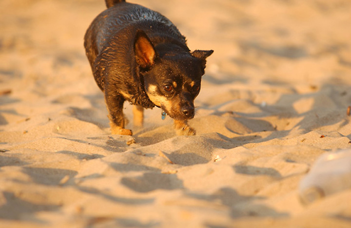 Tia_walking_in_sand