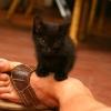 Foot_kitten_001