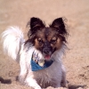 Lola at beach01