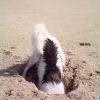 Lola at beach02t_001