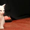 Sittin_kitten