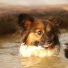 swimming_lola