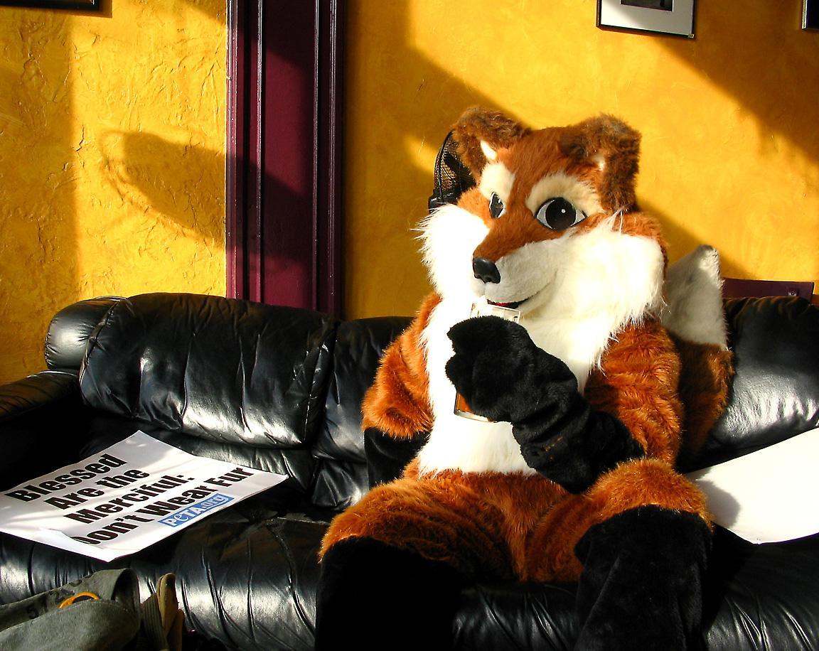 Fox_on_break